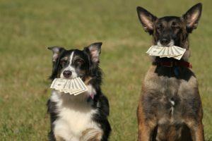 alpha dog food referral program