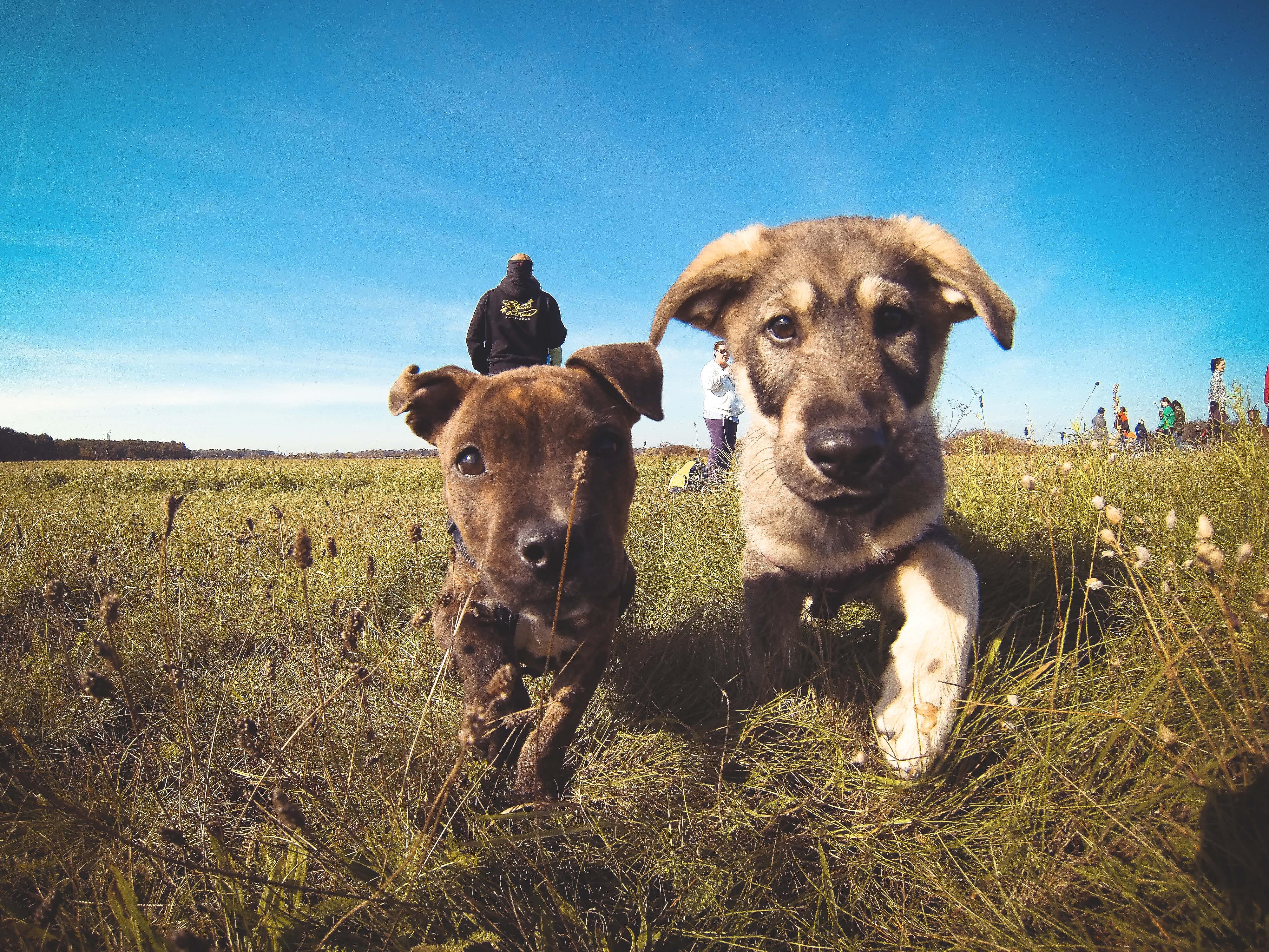 cute puppy pic