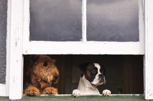 Dog Food Delivery
